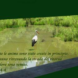 Una citazione di Edgar Cayce